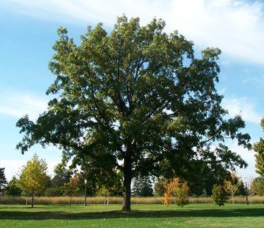 oak prairie nursery estates lincoln nebraska choosing oaks